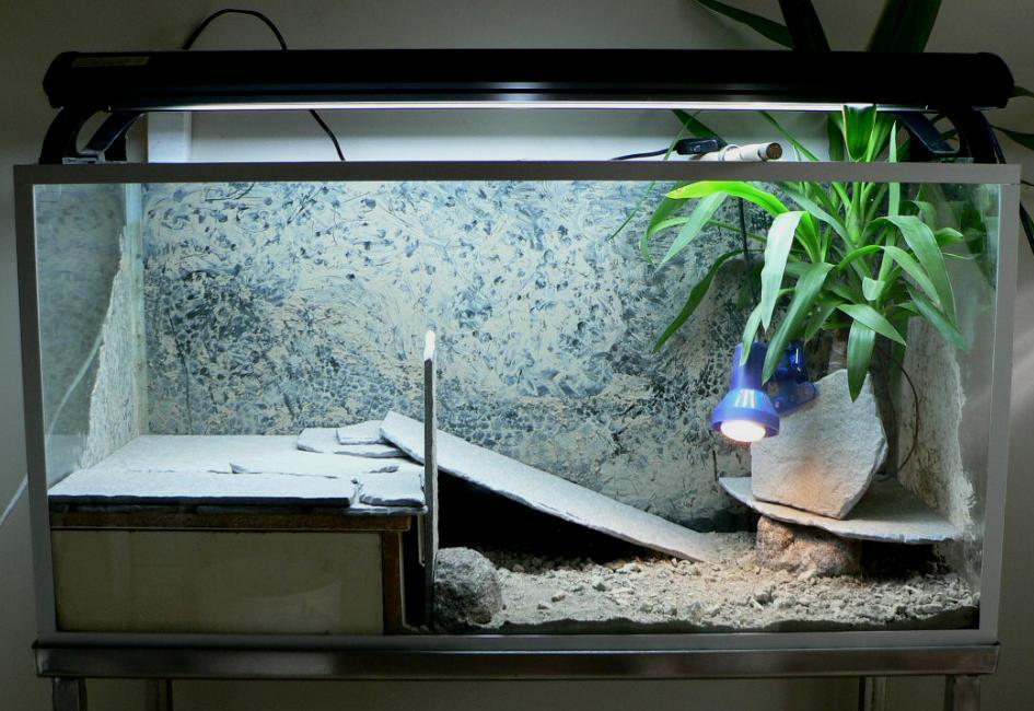 Kilpikonna Terraario